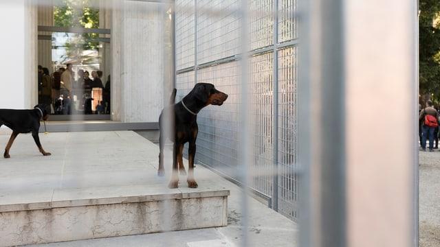 Hunde  in einem Zwinger vor dem deutschen Pavillon.