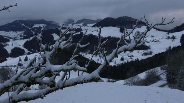 Bei Eptingen waren die Wiesen weiss und auf den Ästen lagen etwa 3 Zentimeter Schnee.
