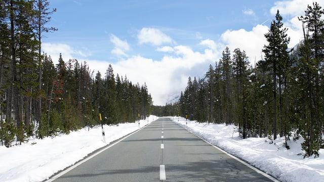 La via che maina al Pass dal Fuorn, fotografada en il Parc Naziunal Svizzer a Zernez.