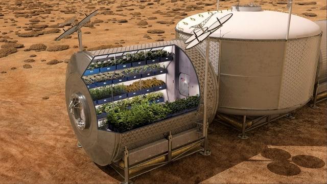 Eine Illustration zeigt, wie ein System zum Gemüseanbau auf dem Mars aussehen könnte.