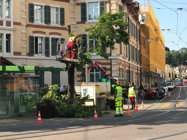 Die Stadtgärtnerei fällt einen Baum