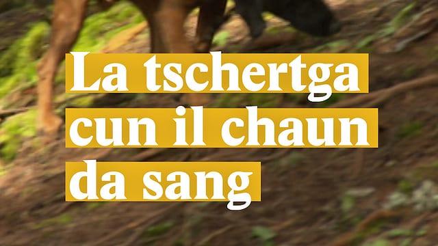 Laschar ir video «La tschertga cun il chaun da sang»