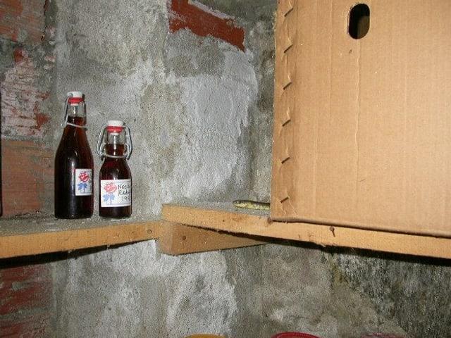 Aeskulapnatter schaut gwunderig hinter einer Schachtel im Keller hervor.