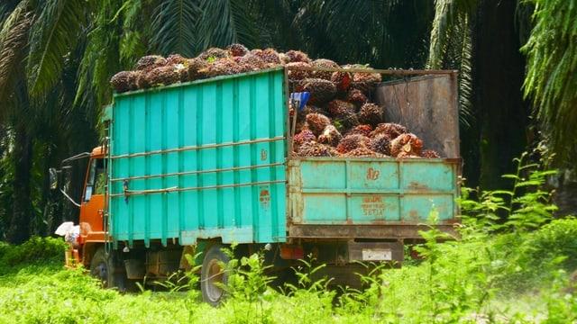 Lastwagen mit geernteten Palmoel- Nüssen