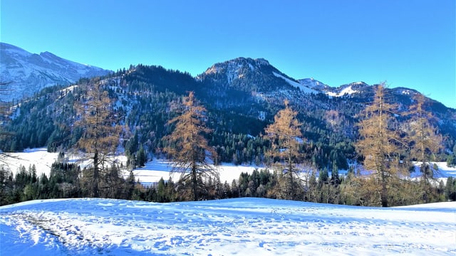 Schneebedeckte Landschaft mit stahlblauem Morgenhimmel.