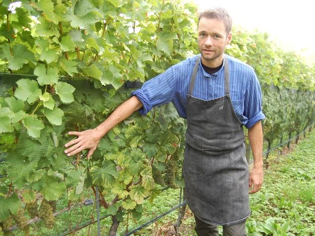 Ein Mann zeigt auf ein vertikales Netz vor den Weinreben.