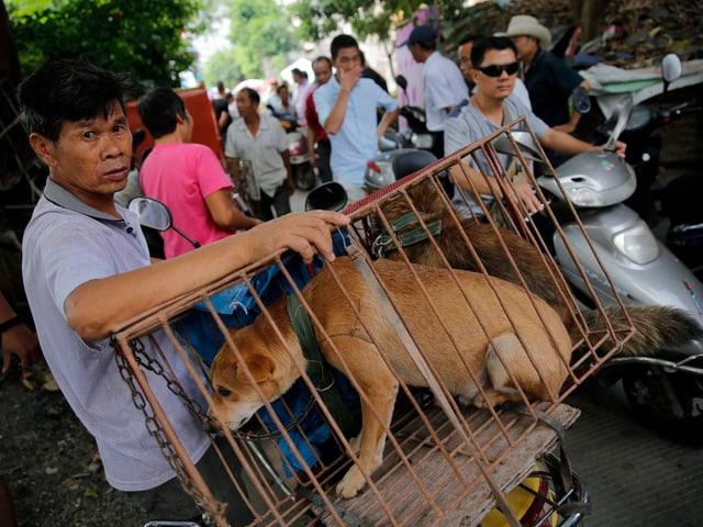 Händler mit Hund in Käfig