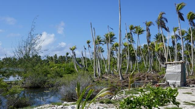 Palmen und ein Wellblechverschlag.