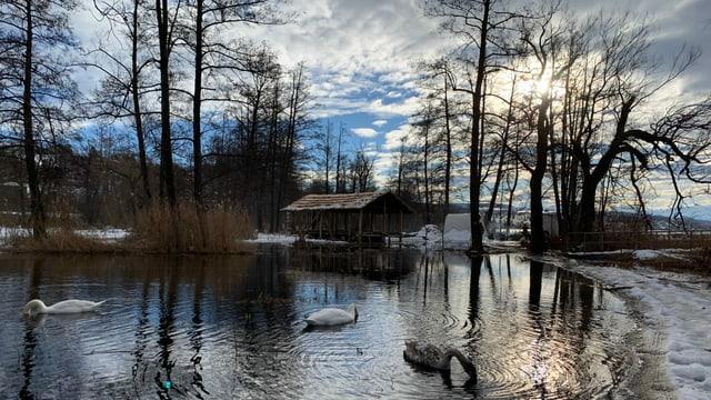Holzhaus im Wasser, Schwäne davor.