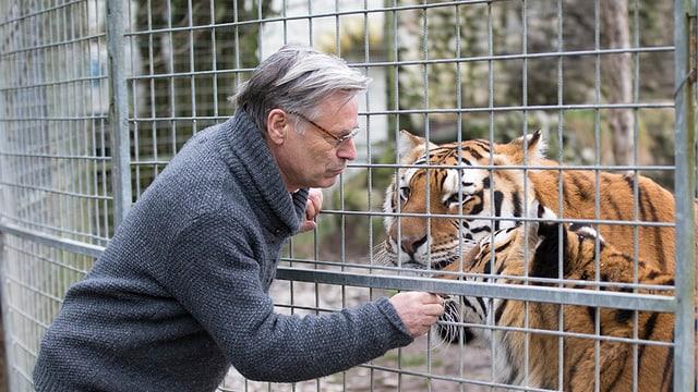 Ein Mann vor dem Gitter berührt einen Tiger