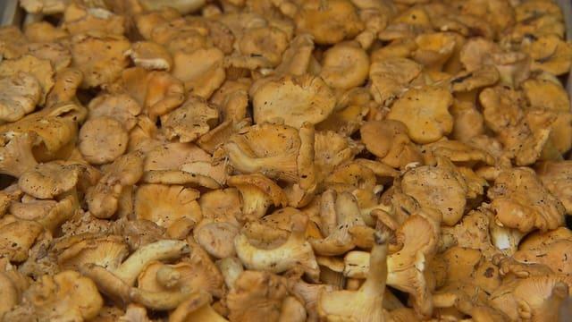 Pilze: Tipps für den Kauf und fürs Kochen