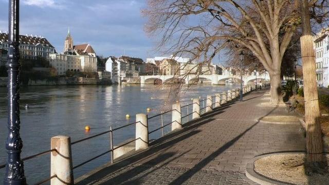 Der Rhein in Basel - links ist die Grossbasler Seite sichtbar, rechts ein Baum