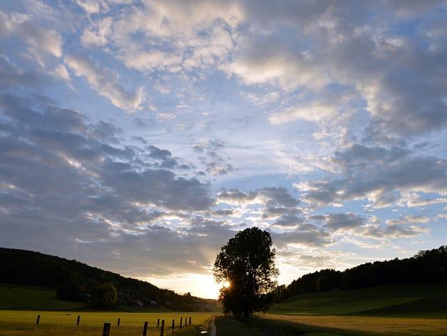Feld mit Baum, tiefstehende Sonne und einige Wolken am Himmel
