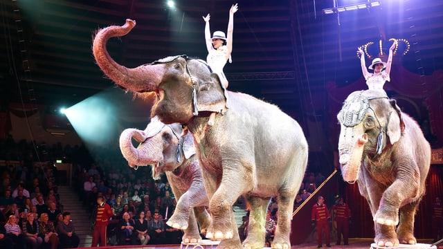 Zirkus - drei Elefanten auf Podesten in der Manege