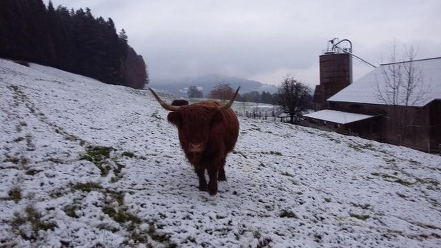 Auch in Gontenschwil lag am Sonntagmorgen etwas Schnee.