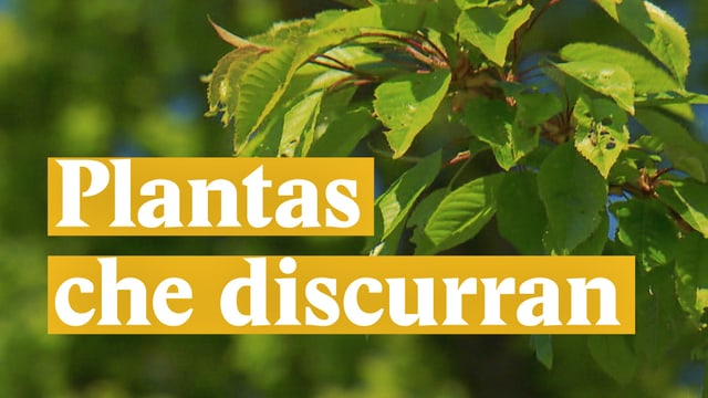 Laschar ir video «Plantas che discurran»