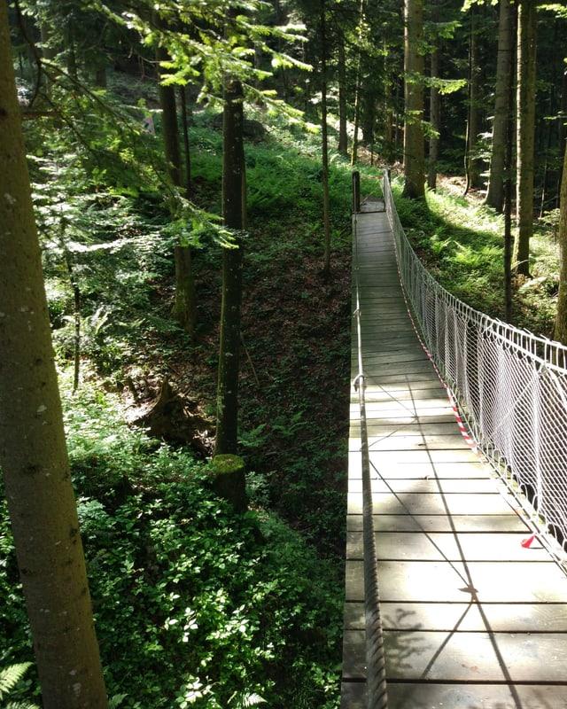 Die Hängebrücke im Wald.