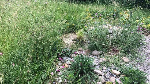 Ein Mix aus Steinen, Gräsern und Blumen.