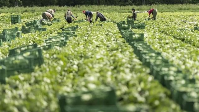 Ein Feld, darauf Landwirte, die arbeiten.