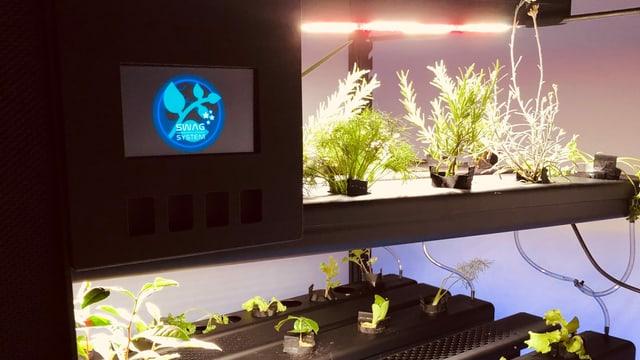 In schwarzen Balken mit wachsen aus kleinen Löchern grüne Pflanzen heraus.