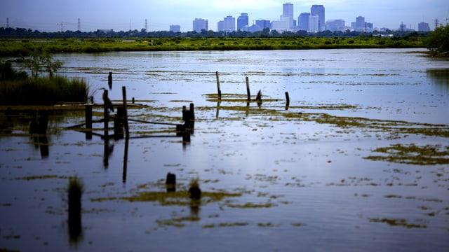 Sumpflandschaft in New Orleans in einer klimatisch gewittrigen Abenddämmerung.