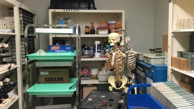 Zimmer mit Skelett, Büchern und Mikroskopen.