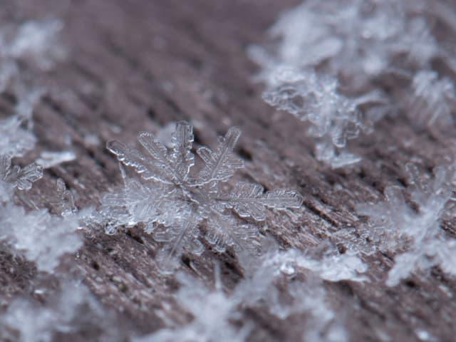 Rinde eines Baums, darauf die Nahaufnahme von Schneeflocken.