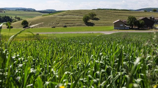 Landwirtschaftsgebiet in der Region Zürich