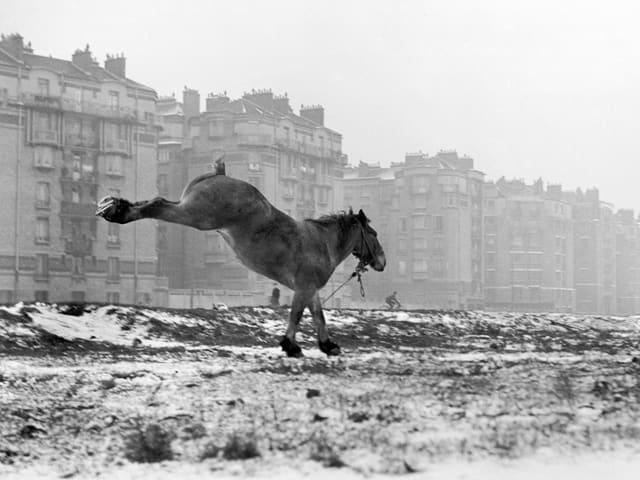 Porte de Vanves, Paris, 1951
