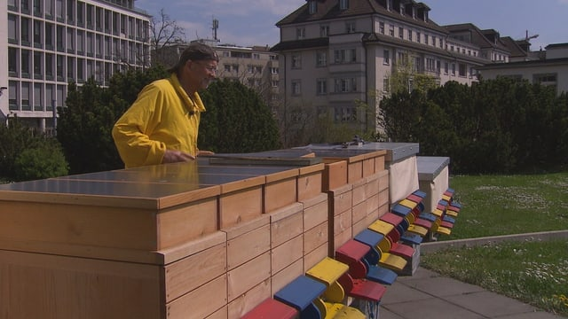 Bienen-Haus mit Imker in Zürich.
