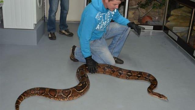 Schlange auf Boden