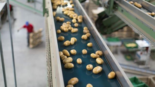 Kartoffeln in Firma.