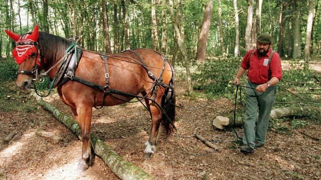 Pferd schleppt einen Baumstamm aus dem Wald