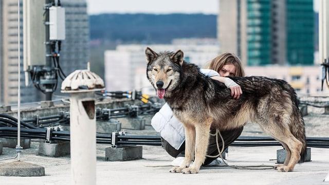 Ein Wolf steht auf einem Hausdach in einer Stadt, dicht hinter ihm und den Arm um ihn legend, kauert eine Frau.