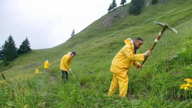 Asylsuchende leisten Arbeitseinsätze in der Natur.