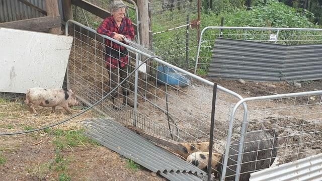 Rob Barker mit neuen Schweinen. Seine Haustiere verbrannten.
