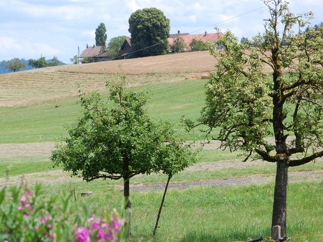 Bauernland mit Obstbäumen und einem Hof im Hintergrund.