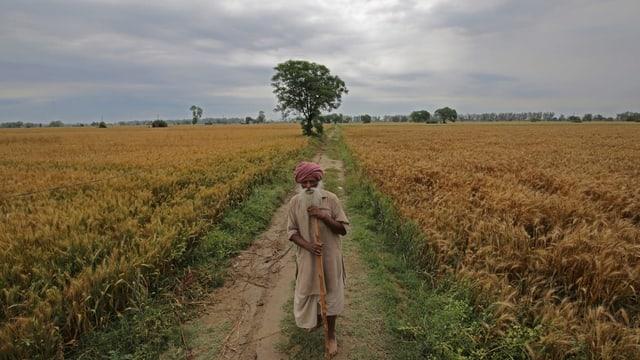 Alter Mann auf einem Getreidefeld