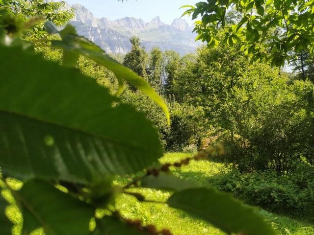 Kastanienblatt mit Bäumen im Hintergrund-