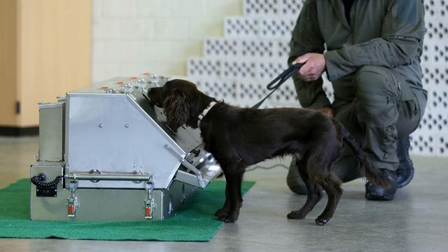 Ein junger Hund schnüffelt an Proben.