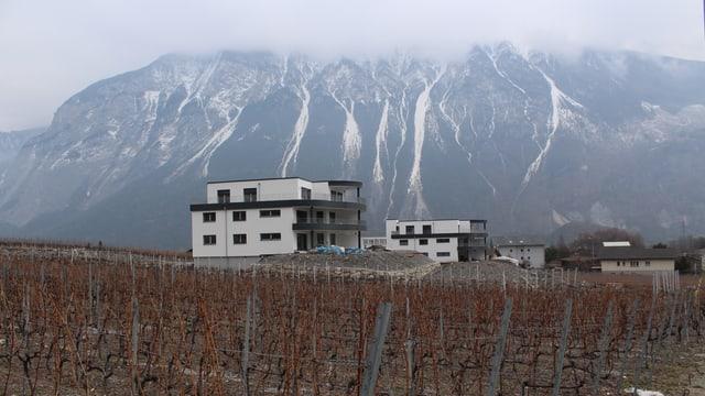 Ein Weinberg mit Häusern, im Hintergrund Berge in den Wolken.