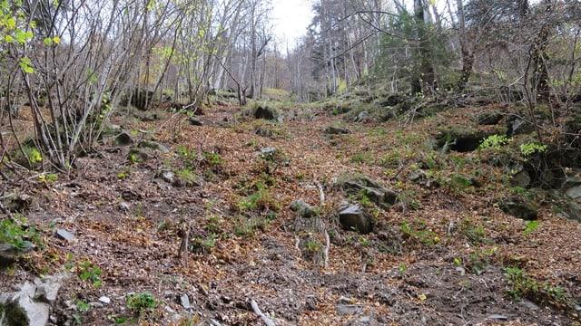 L'um sparì è vegnì chattà sonda la damaun en la Val Roggiasca.