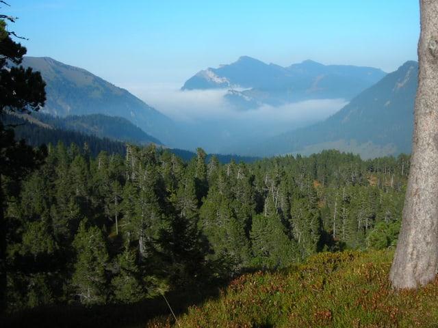 Waldstück in der Schweiz - im Hintergrund Berge.