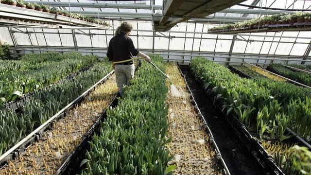 Trotz Corona-Krise: Die Arbeit in den Gärtnereien muss weitergehen, mit ungewisser Zukunft.