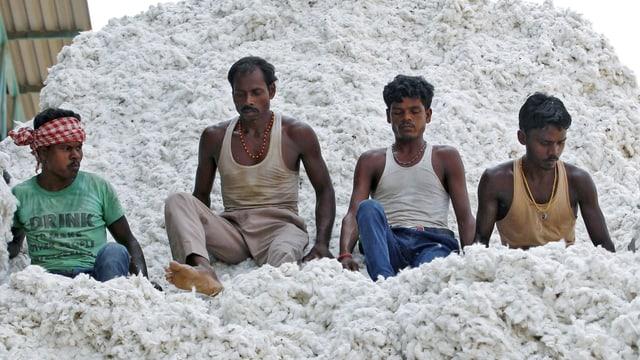 Baumwollarbeiter Indien