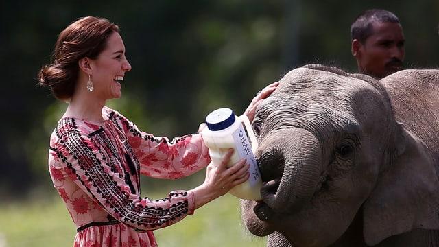 Kate füttert Elefanten mit Milchflasche.