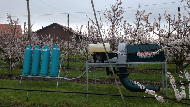 Frostheizung für Aprikosen