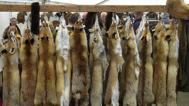 Tote Füchse hängen an Haken.