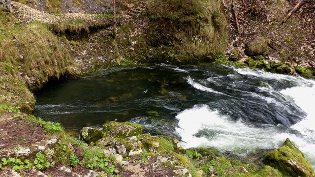 Ein Fluss kommt aus einer Höhle im Wald.