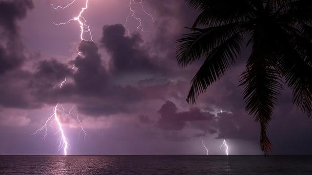 Violett erleuchtete Nacht mit 2 Blitzen, ein paar Wolken, dem schimmerndem Meer und im Vordergrund Palmenblättern.